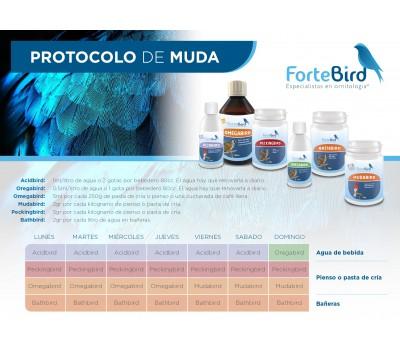 Pack Protocolo de Muda