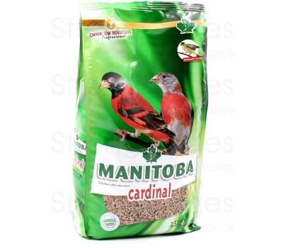 Mxt. Cardenalitos Cardinal.