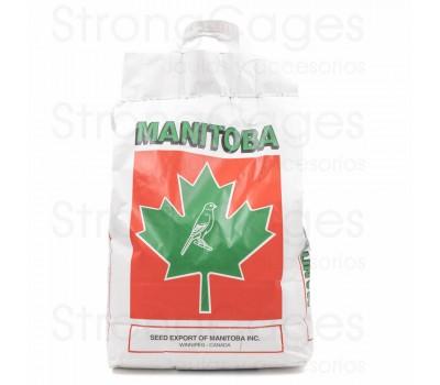 Mxt. Canarios T3 Platino (Manitoba)