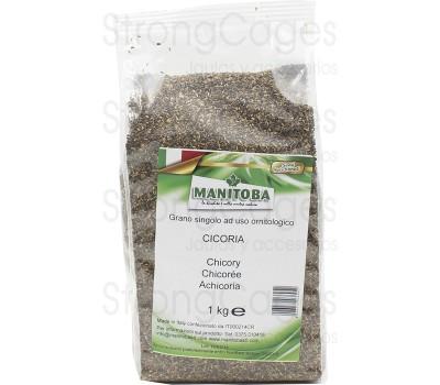 Achicoria (Manitoba) 1kg.