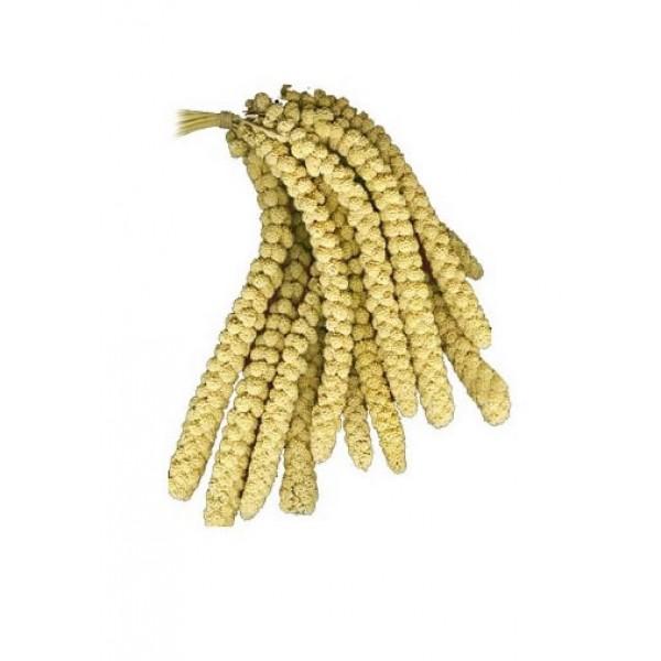 Prestige Premium Millet