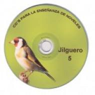 jilguero 5