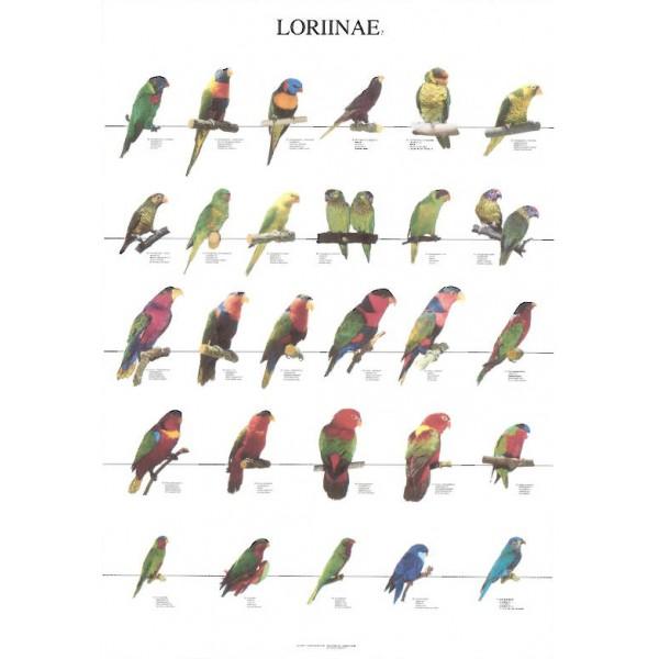 Loritos 2