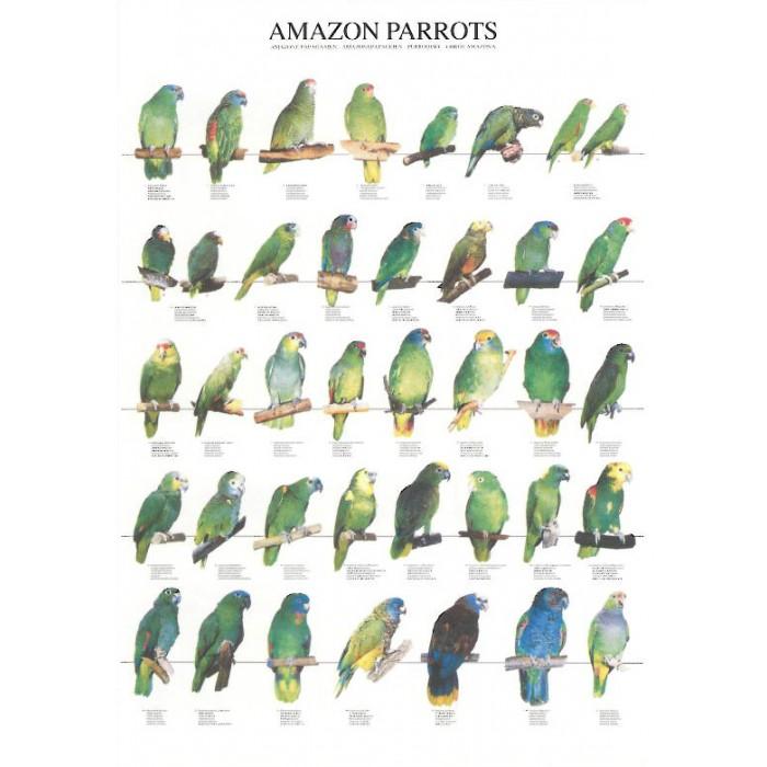 Loros amazónicos