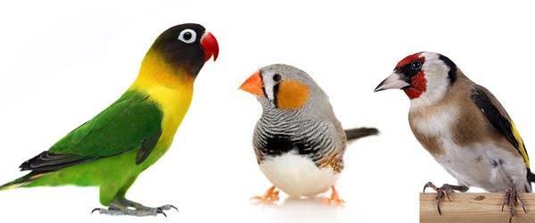 photo birdssssssss_zps63339e4a.jpg